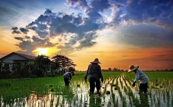 Efek Disrupsi, Mungkinkah Kembali ke Desa Trainer Leadership Indonesia