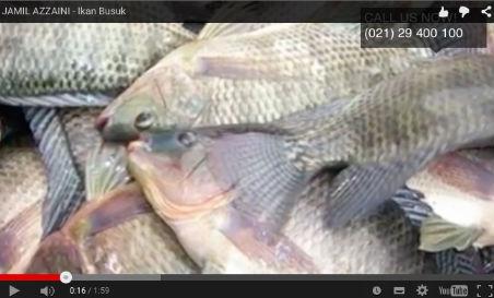Ikan Busuk
