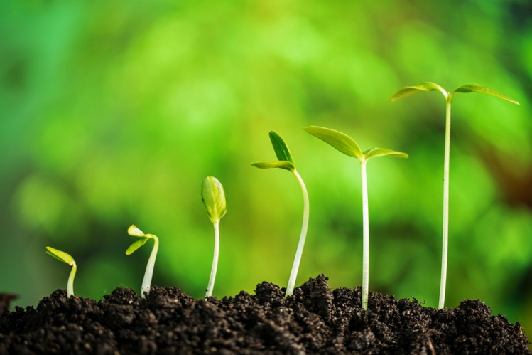 Apa Yang Perlu Growth?