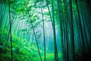 Belajar dari Pohon Bambu Leadership Trainer Indonesia